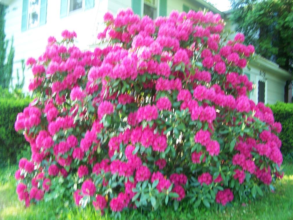opening spring & pink 003