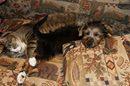 """""""Ha Ha, I'm sleeping on the coooouuuuch!"""